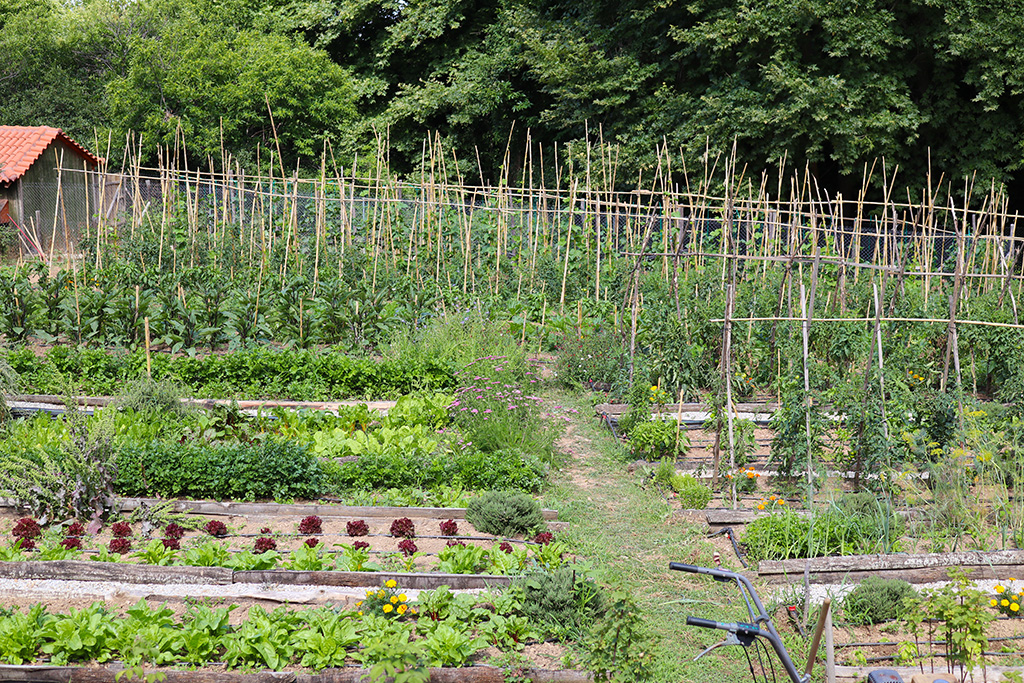 Gemüsegarten Karaiskos-Farm.