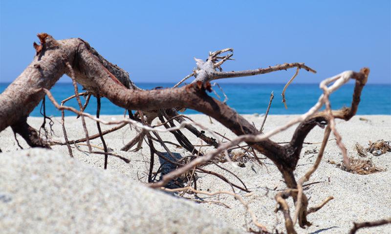 Treibgut am Possidi-Beach Kasandra
